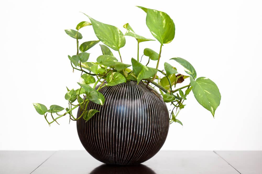 Feng Shui Wealth Plants
